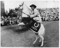 baltimore colts mascot
